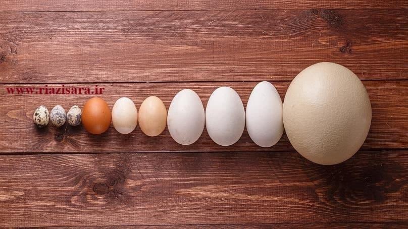 کشف فرمول شکل تخم مرغ